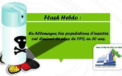 Flash Hebdo #3 - Insecte Allemagne