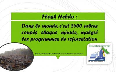 Flash Hebdo - Déforestation