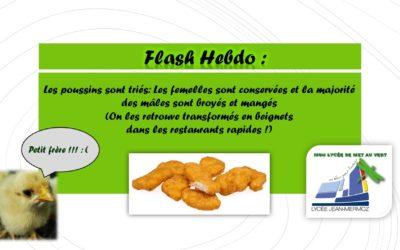 Flash Hebdo #5 - Nuggets de Poussin