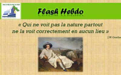 Flash Hebdo #8