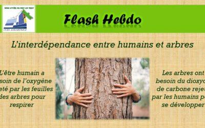 Flash Hebdo #9