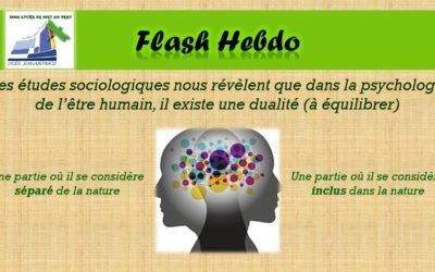 Flash Hebdo #11