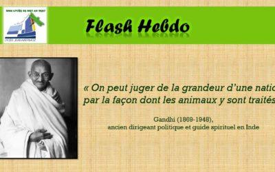 Flash Hebdo #12