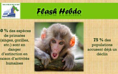 Flash Hebdo #13