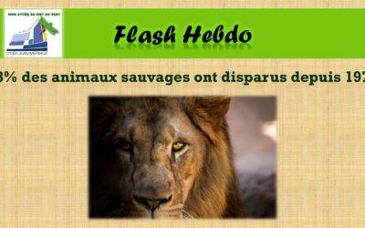 Flash Hebdo #19